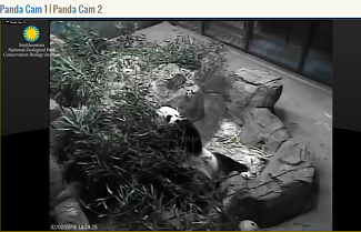 Live panda stream National Zoo Smithsonian